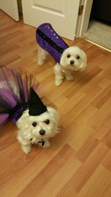 My witchery witch and wickedly wizard x