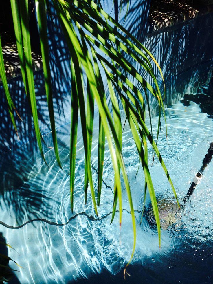Dreaming of Brazil Summer - Shadowflower