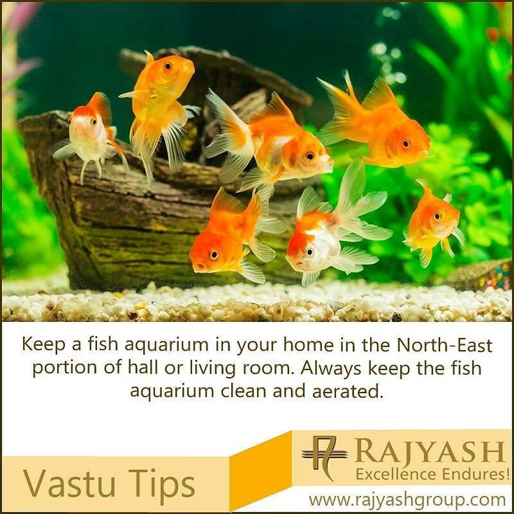 Keep a fish aquarium in your home in the North-East portion of hall or living room. Always keep the fish aquarium clean and aerated. It is supposed to help in growing your wealth.  #Vastu #Tips #Home #Decor #Design #Interior #FishTank #Aquarium