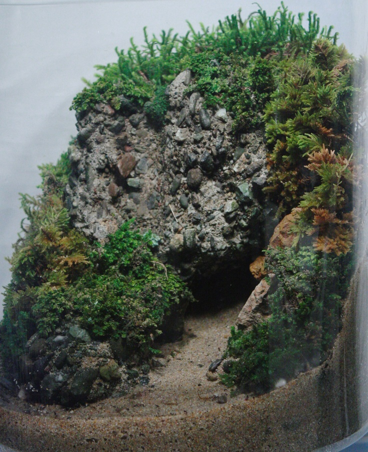 Landscapes of Wilderness terrariums - The Slug and the Squirrel