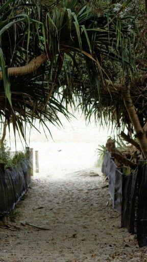 Beach bound - Tallow Beach via Suffolk Park