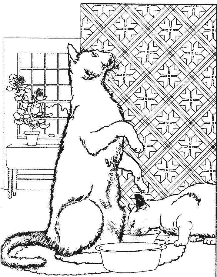 coloriage chats devant leur gamelle