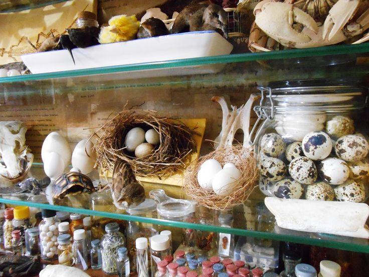 pássaros empalhados, caranguejos, crânio de avestruz, ovos e uma pequena tartaruga. In Brazil.