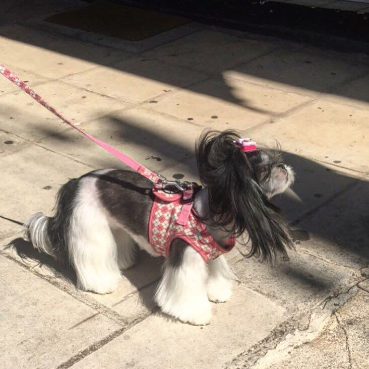 #candy #dog #cute #lady #rosinaperfumery #nicheperfumery #nicheperfumes #perfume #perfumerygreece #highend #luxury #address #giannitsopoulou6 #glyfada #athens #greece #shoponline : www.rosinaperfumery.com