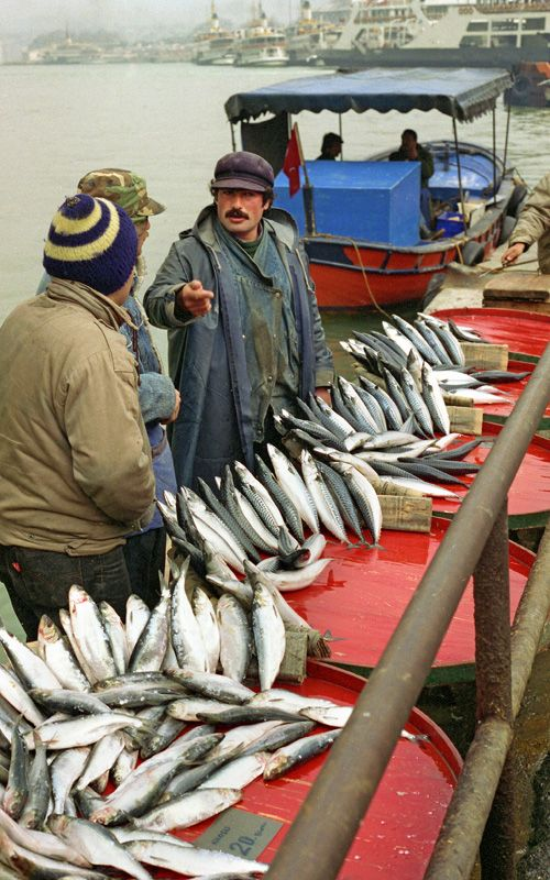 Selling Fish at Golden Horn - istanbul, Istanbul