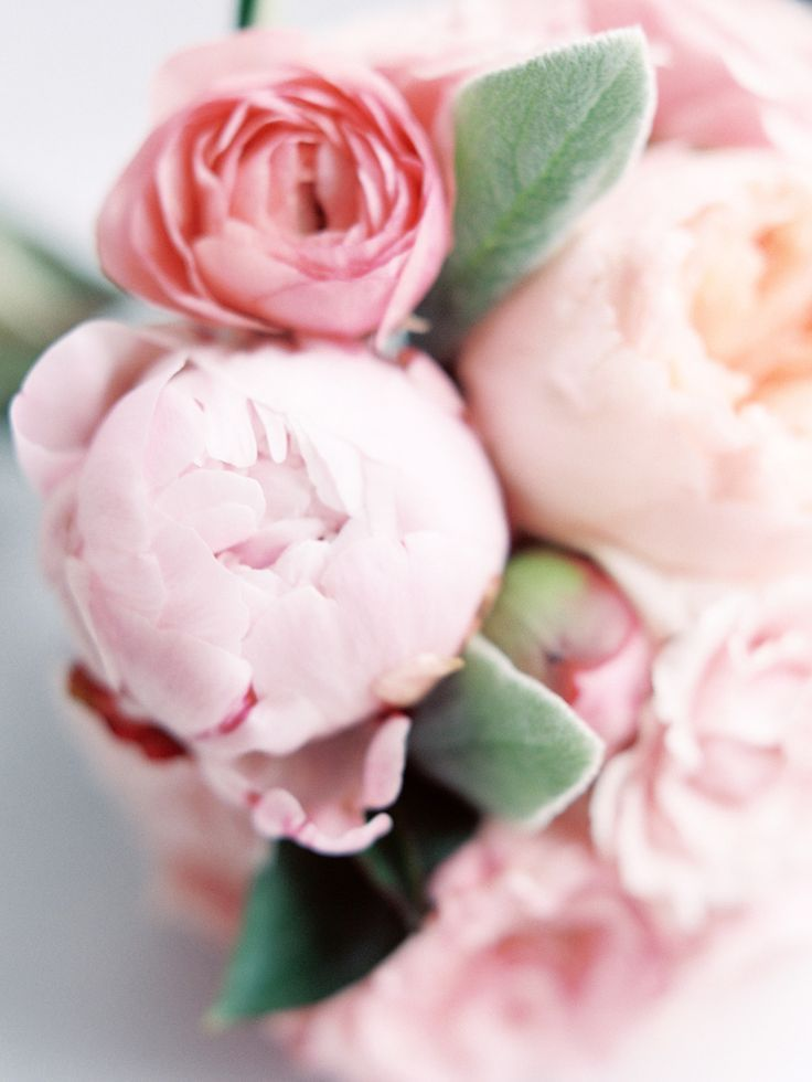 House Beautiful: Pale Pink Pretty | ZsaZsa Bellagio - Like No Other