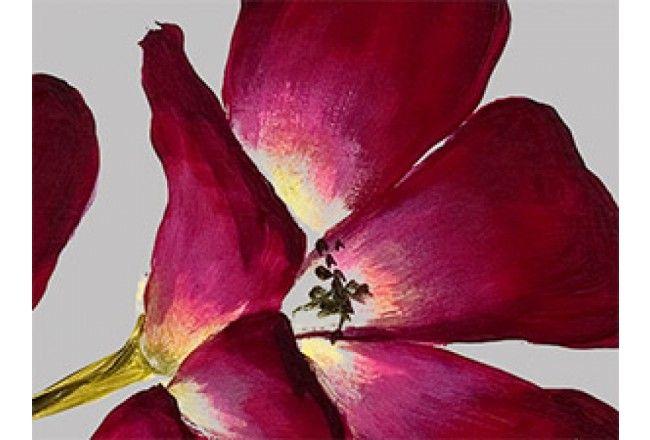 Cuadro+moderno+Orquídea+salvaje