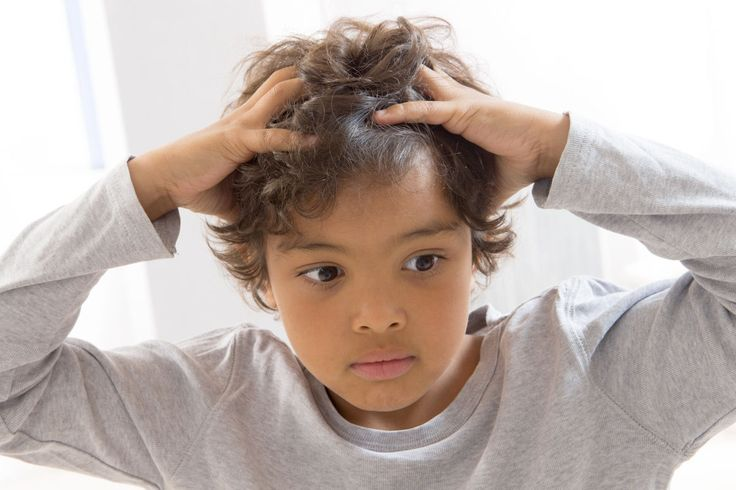 Kopfläuse – was tun? - Wer Kinder im Kindergarten- oder Grundschulalter hat, kommt kaum umhin, sie kennenzulernen: Kopfläuse.