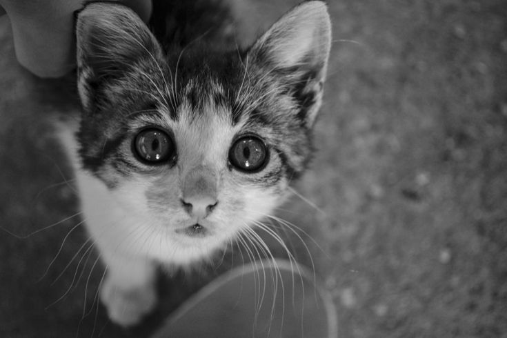 Check out now Cuteness overload, part of Most Beautiful Eyes 2 contest with rating 0.00 and vote. Enjoy creativity with Voubs.com