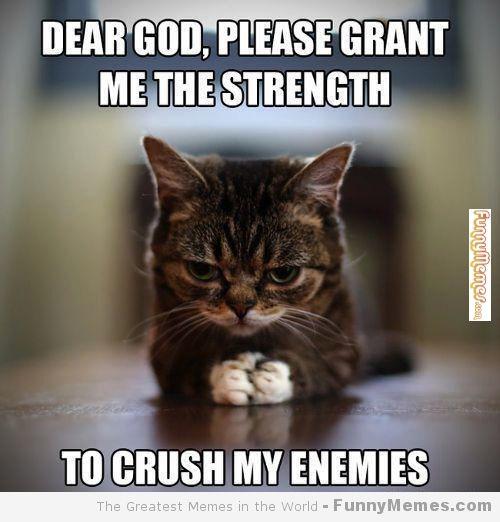 funny cat memes | Cat memes - [Please grant me the ...