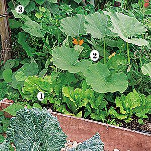Que planter dans un carré potager ?