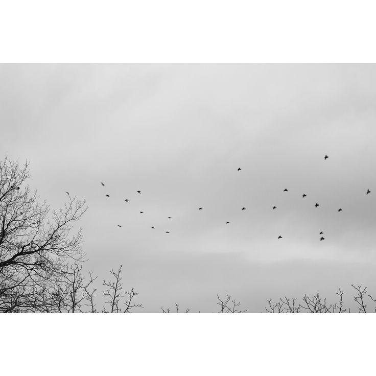 #flyingbirds