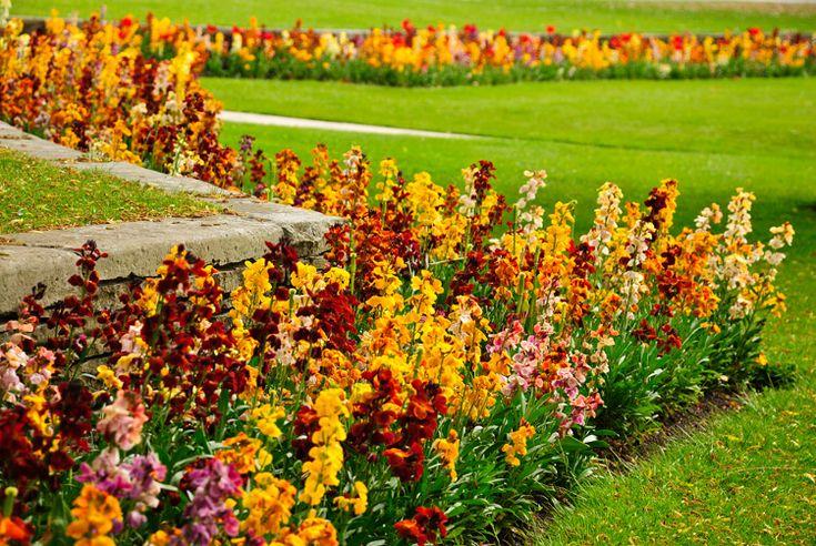 sárga és piros virágágyás