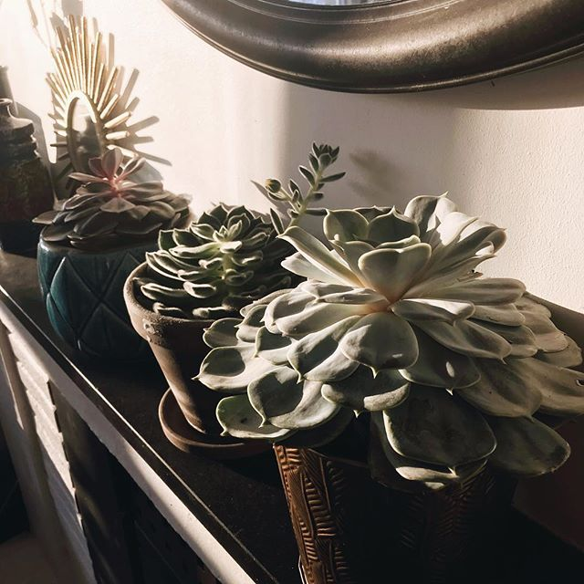 Hard to take nice pictures when the house is a construction site ⚒🛠🚧 but I found these succulents looking pretty in the afternoon-sun 🌱🌞 . . . #followme #industrialdesign #FF #instafollow, #l4l #industrialdesign #plantlife #weekends #basementremodel #renovations #bonytt #boligpluss #boligmagasinet #scandinaviandesign #scandinavianstyle #nordicnoir #nordiskehjem #nordichome #follow4follow #interiordesign #interior #nordicnoirinterior🖤#nordicnoirhouse🖤