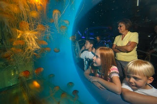 National Aquarium In Dc Washington Dc Pinterest Ideas Fun And Summer Ideas