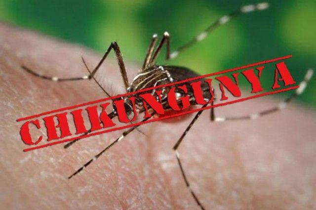 Chikungunya Ke Lakshan aur Gharelu Nuskhe:Chikungunya bukhar ek virus…