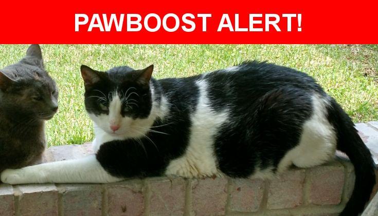 Please spread the word! Checkers was last seen in Granbury, TX 76049.    Nearest Address: Port Ridglea West, Granbury, Texas