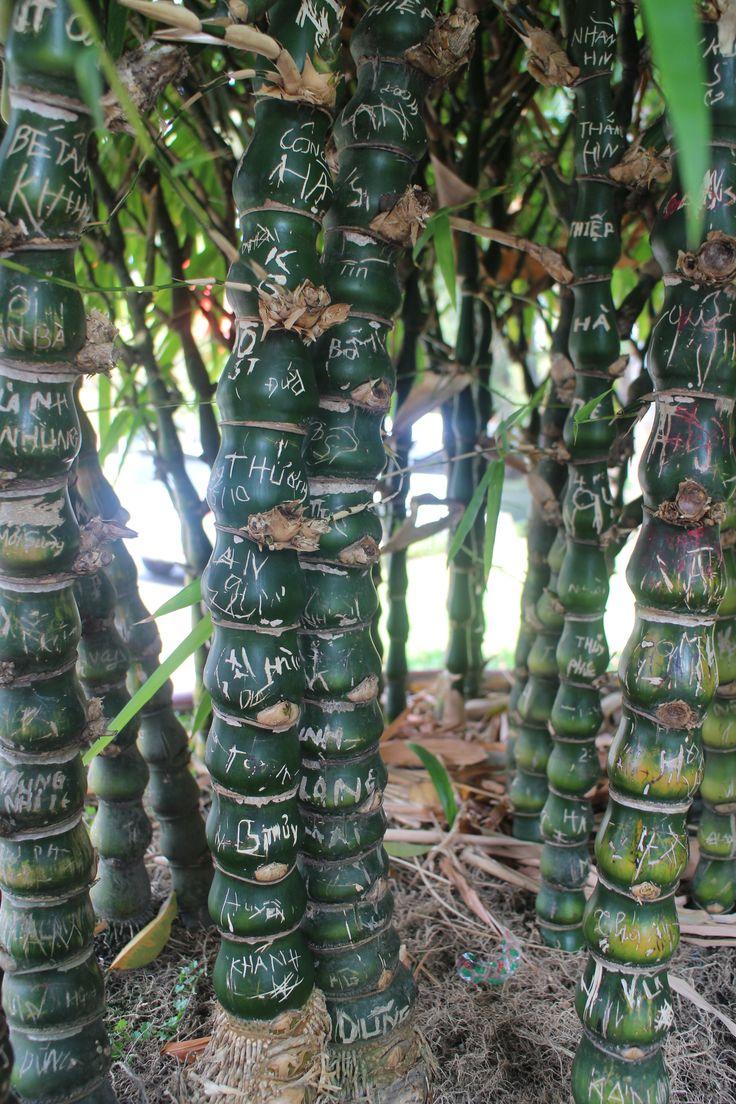 Bamboo - Ho Chi Minh City - Vietnam
