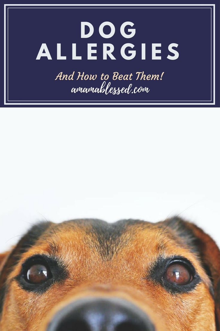 Dog Allergies And How To Beat Them Dog Sneezing Itchy Dog