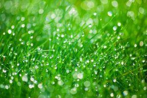 L' #acqua è un elemento importantissimo per il #giardino #biodinamico