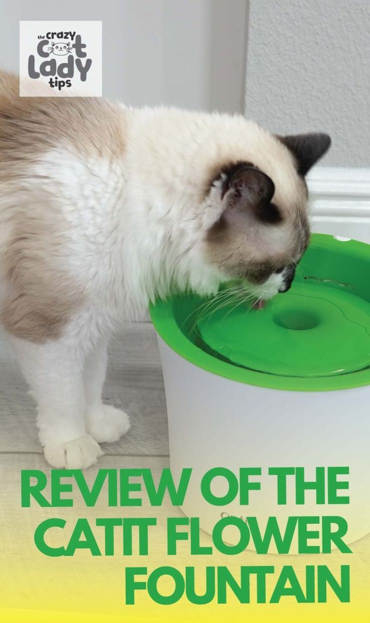 Catit Flower Fountain Review The Crazy Cat Lady Tips In 2020 Cat Water Fountain Cat Fountain Crazy Cat Lady