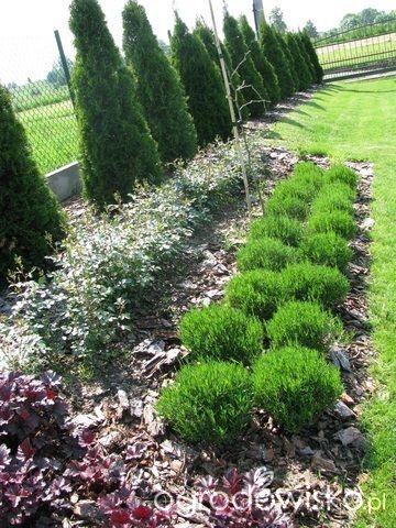 Marzenie o... - strona 134 - Forum ogrodnicze - Ogrodowisko