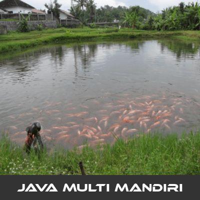 Faktor Kualitas Air Budidaya Ikan Nila