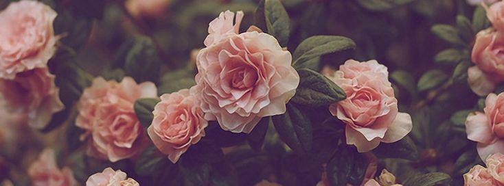 Roses Facebook Covers 2014 Flowers Facebook 3905profile ...  Roses Facebook ...