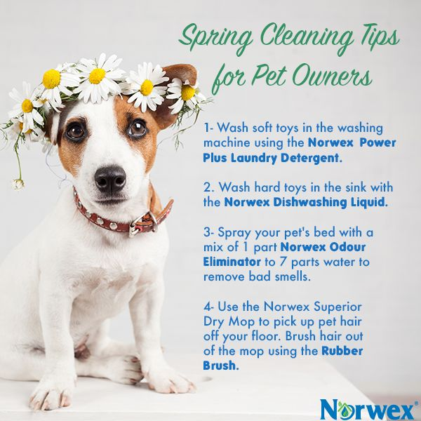 169 Best Cleaning Tips For Life With Dogs Images On