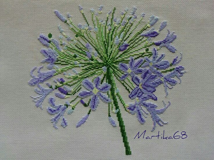 Agapanthus cross stitch