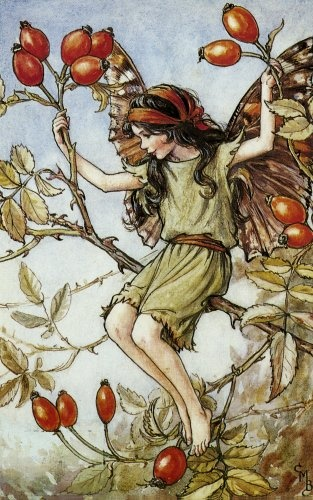 Rose Hip - by Cicely Mary Barker