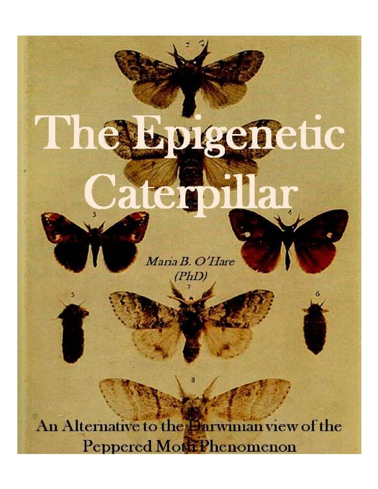 The epigenetic caterpillar: An Alternative to the Darwinain view of the Peppered Moth Phenonmenon