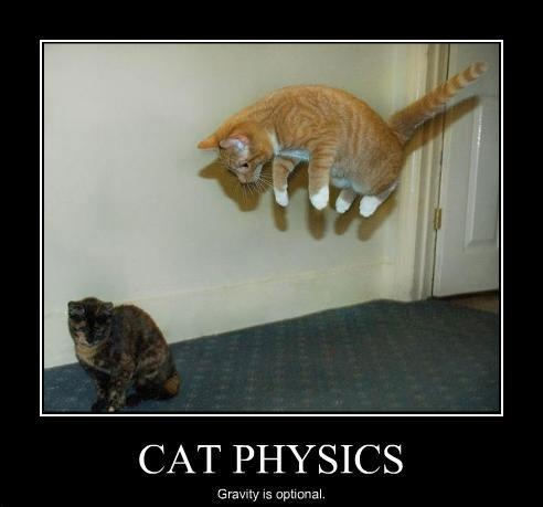 26 best images about physics memes on pinterest cats