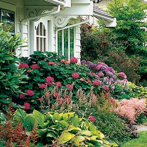 foundation planting tips and plants