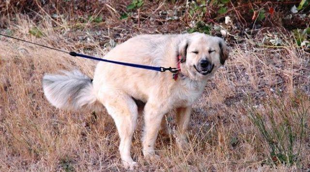 Buang Air Besar Anjing Selalu Menatap Kita, Mengapa? | Blog Note Ku