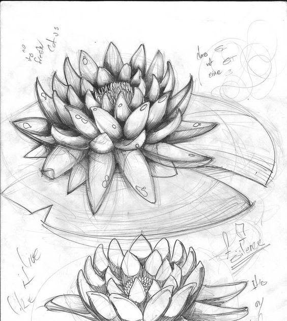 Terkeren 30 Contoh Gambar Pemandangan Dan Hewan 1500 Gambar Sketsa Bunga Hewan Wajah Dan Pemandangan Download Di 2020 Lukisan Bunga Lukisan Tinta Cara Menggambar