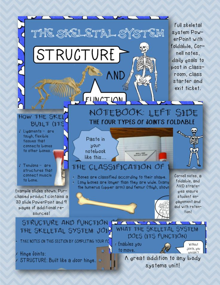 66 best images about Human Body - Skeletal System on Pinterest