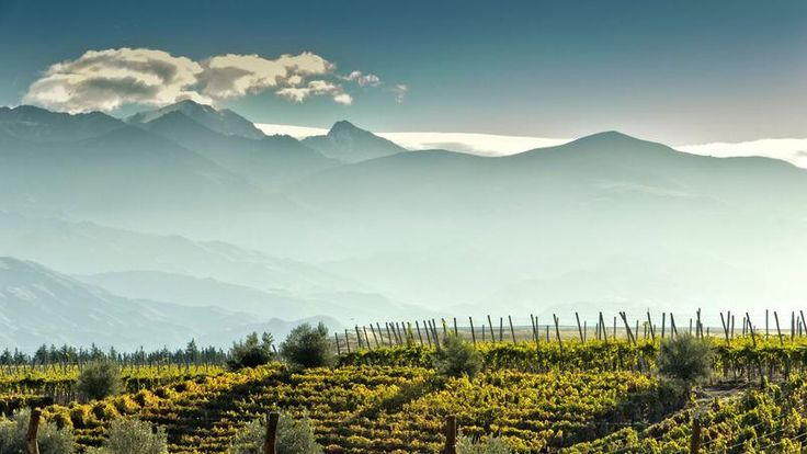 Province de Mendoza : les vignobles argentins - Capitale du vin argentin, cette province en produit plus de la moitié. Avec la Cordillère des Andes en toile de fond, on y découvre des vignobles pluri-centenaires. Dans l'une des mille caves que compte la région, on déguste des crus parmi les plus renommés d'Amérique du Sud.