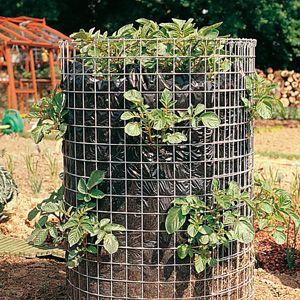 Planter la pomme de terre - Méthode de plantation dans un grand bac