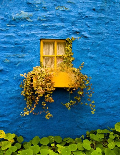 yellow & blue how cool is this! Looks like a window in the middle of the ocean! Its very fun!