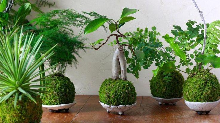 les 56 meilleures images du tableau jardin int rieur sur pinterest jardin int rieur jardinage. Black Bedroom Furniture Sets. Home Design Ideas