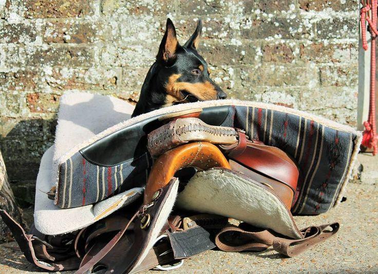Got my Saddle now where is my Pony.....