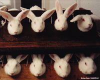 Canada: End Cosmetics Animal Testing: Ems Animais, Animals, Cosmetics Animal, Animal Cruelty, Animal Testing, Test Ems, Nyx Cosmetics, Small, Cosmetics Test