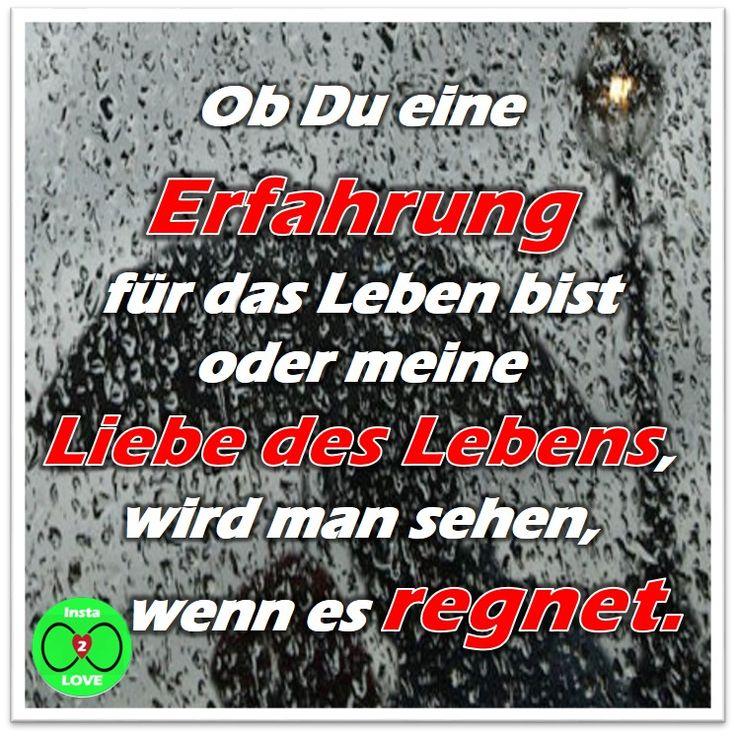 Spruch: Ob Du eine Erfahrung  für das Leben bist oder meine  Liebe des Lebens, wird man sehen,  wenn es regnet.