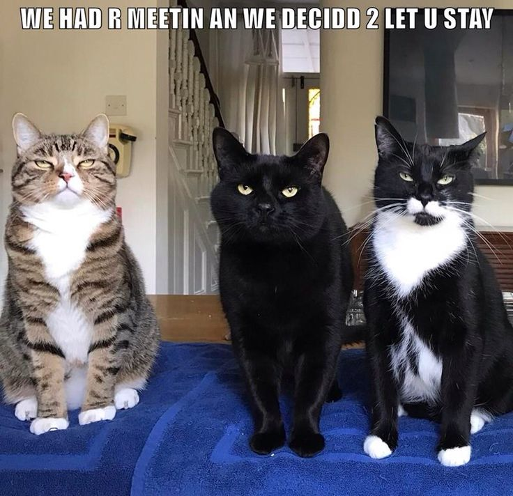 We held a meeting to discuss you residency. The vote was unanimous, We have decided, you may stay. Welcome to the CatHouse.