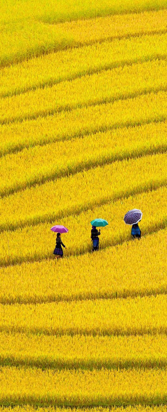 #vietnam #amarillo #campo