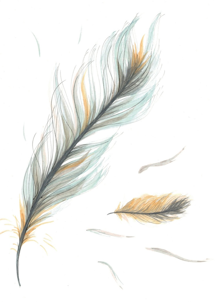 feather drawing