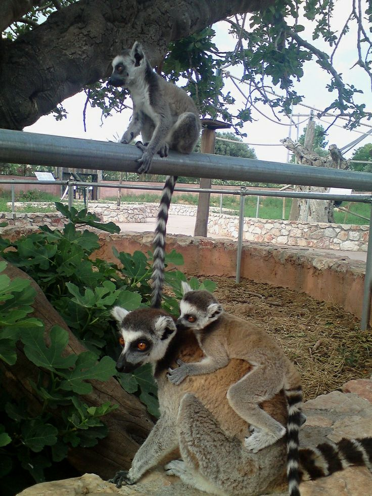 animal captivity Last chance for animals is a national, non-profit organization dedicated to eliminating animal exploitation through education, investigations, legislation, and media.