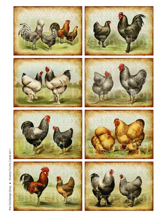 ATC Background Vintage Rooster Chicken Art by TheOldDesignShop, $3.50