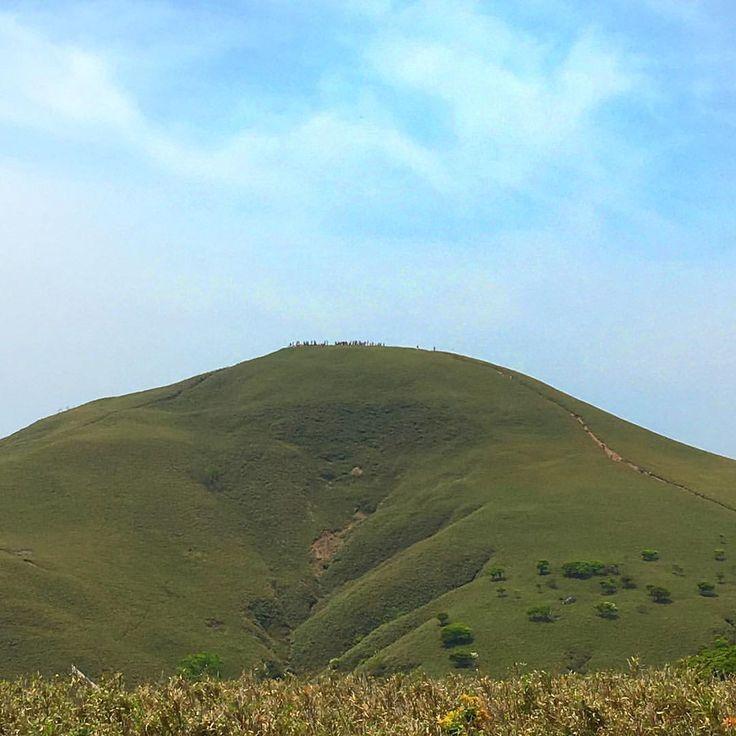 . . 竜ヶ岳⛰ 青い空と緑のクマザサと白い羊を狙ったショット📷だったが白は無し…… 今年は白い羊、シロヤシオの開花しているのが少ないみたい😢今年は期待できないのか? . . それにしても山頂は人であふれかえっていた(写真ではアリのようにしか見えないが… . . #竜ヶ岳#山登り#山登り好きな人と繋がりたい#登山#登山好きな人と繋がりたい#鈴鹿セブマウンテン#シロヤシオ#宇賀渓キャンプ場#金山尾根#遠足尾根#FB登山部